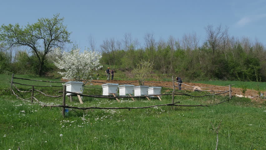 Fenced beehives in the meadow, farmers working on the agriculture field in the background at the countryside, spring season, sunny day. panoramic view, outdoors, daylight, blue sky.