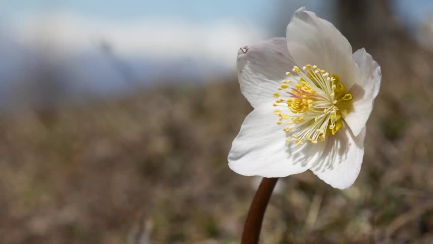 White Flowers Names