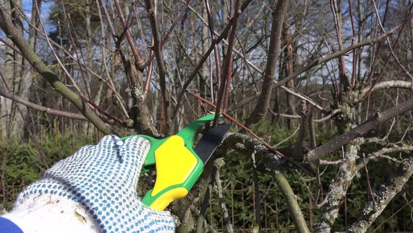 fruit tree cut trim prune with scissors in spring garden on background of blue sky. Handheld hand closeup shot. - 4K stock video clip