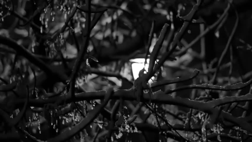 Night Winter The Light comes from Street Lamp snow is melting black and white footage - HD stock footage clip