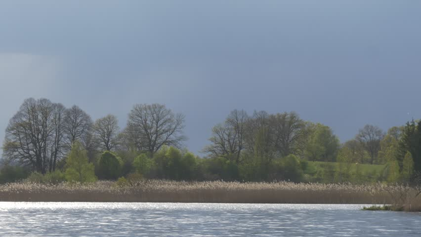 bright green meadow against dark clouds, insects flying and glitter in the light at the lakeside #16513729
