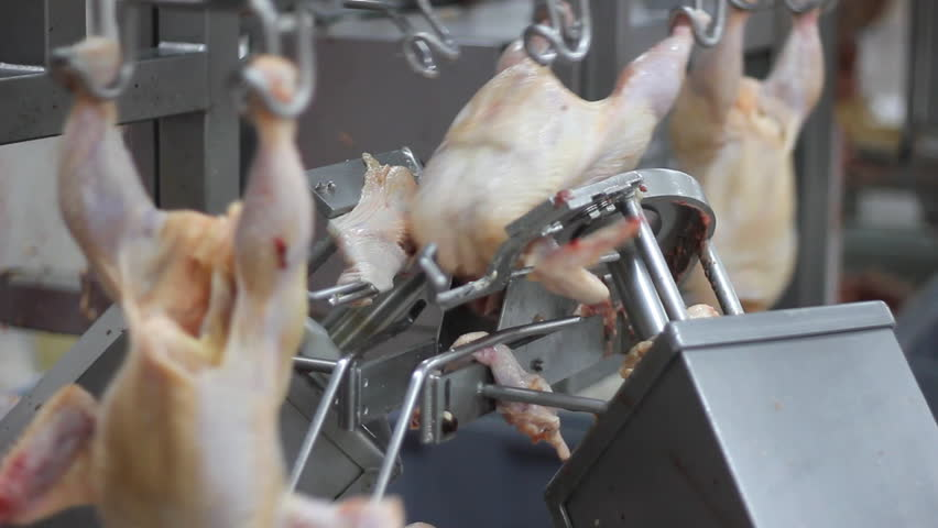 Food industry, chicken meat