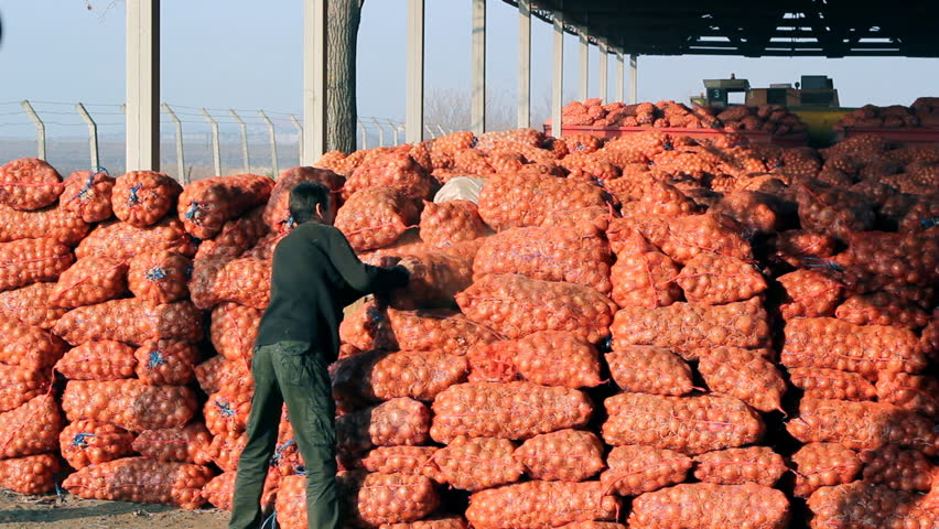 farmer sets bag with onions in storage,video clip - HD stock footage clip
