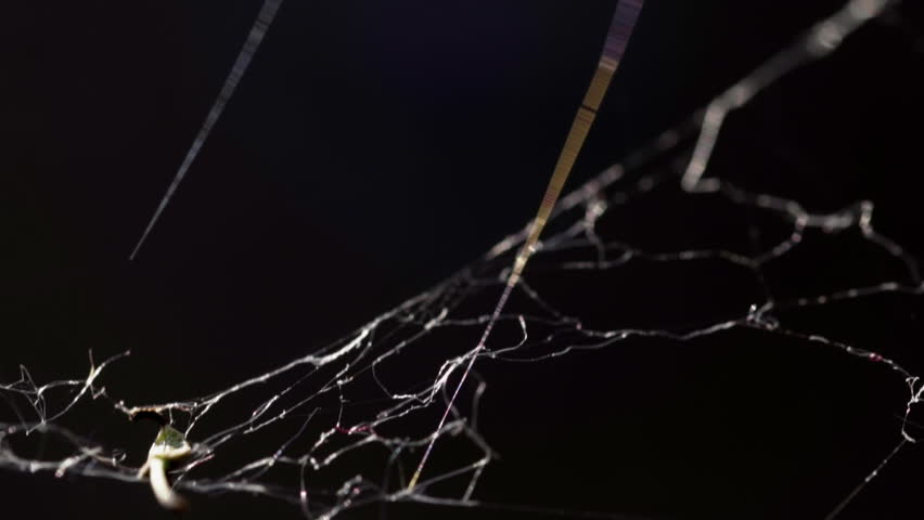 Cobweb in extreme close up HD stock footage. A Spiders Web in true macro close up in slow motion against a black background