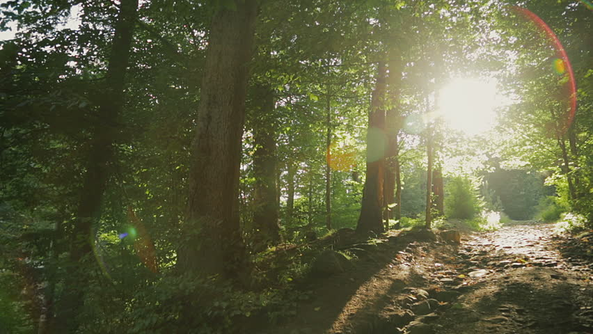 Pathway in the forest with sunlight backgrounds. - HD stock video clip