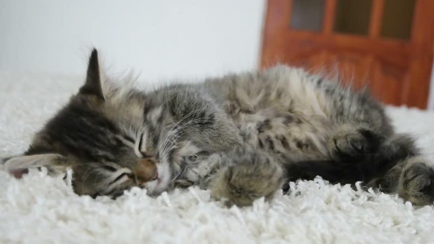 Cute kitten sleeping in the room | Shutterstock HD Video #17530216