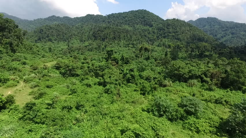 Aerial video above tropical forest in a sunny day | Shutterstock HD Video #17533528