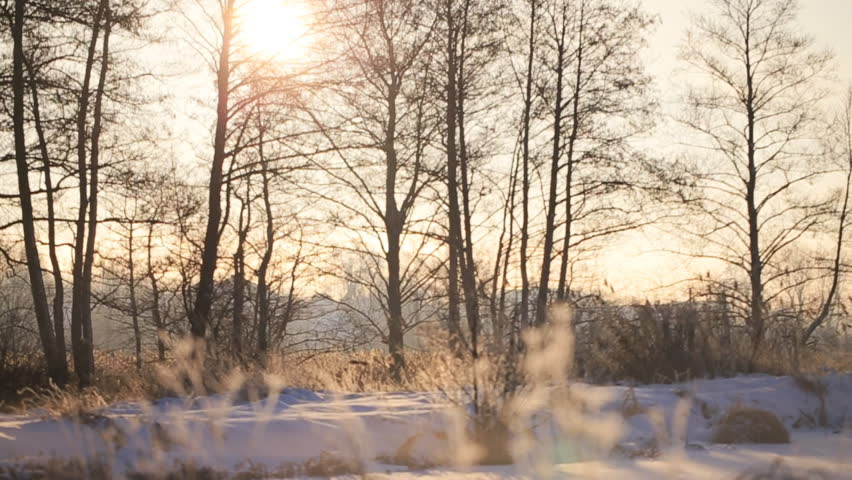 Falling snow in a winter park with snow covered trees, slow motion. - HD stock video clip