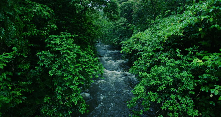 River flows through tropical rain forest jungle in Maui, Hawaii | Shutterstock HD Video #17648755