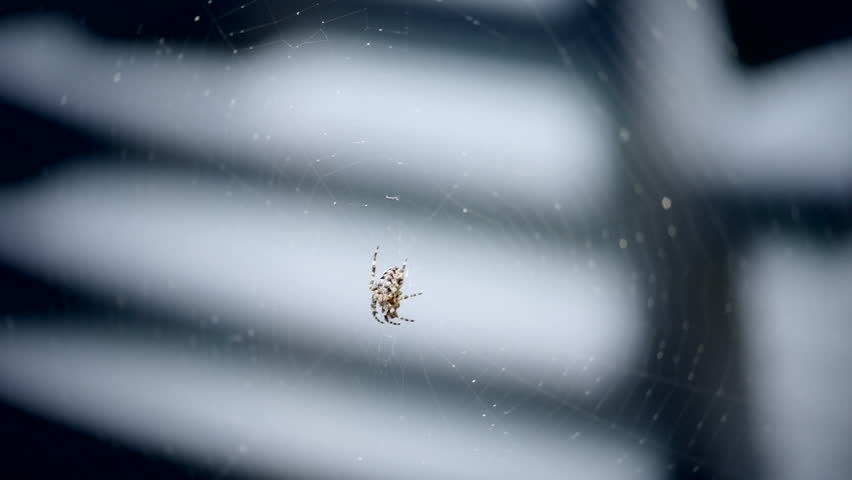 Spider in the wind | Shutterstock HD Video #17711449