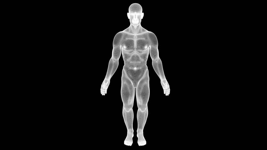 Male Human 3D Wireframe Hologram in Motion. Nice 3D Rendering  - HD stock video clip