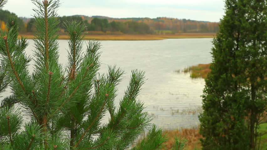 Dolly shot of pine tree with lake on the background - HD stock footage clip