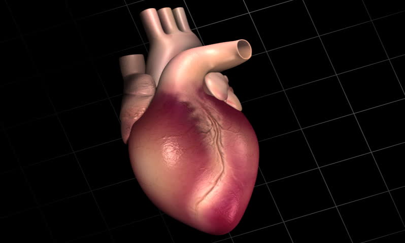 footage of a human heart with eco cardio gram pulse