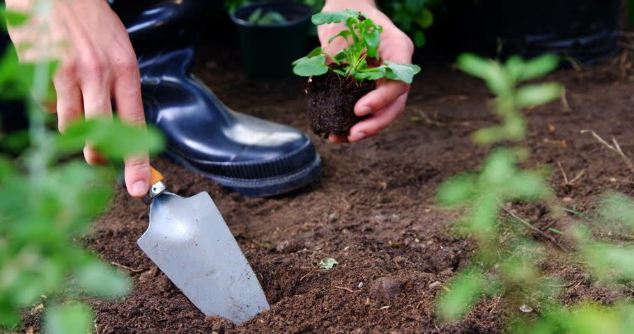 Gardener planting sapling in garden at greenhouse 4k