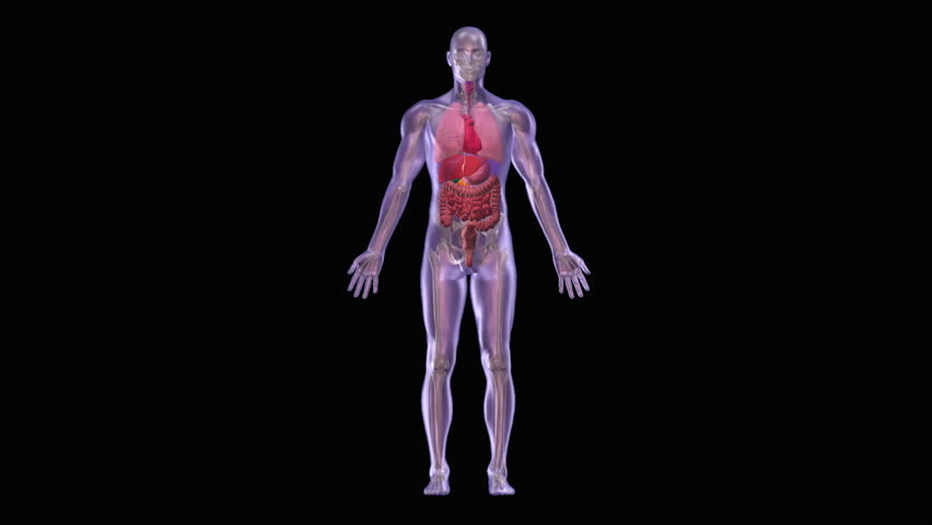 Yoga Body Structure And Energy I Loop 3d Animation