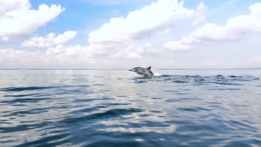 Tranquil and serene slow motion video of wild dolphins jump from water in sea | Shutterstock HD Video #18070063