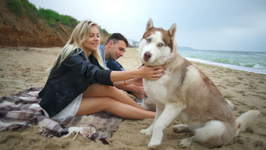 happy couple sitting with their husky dogs on the...