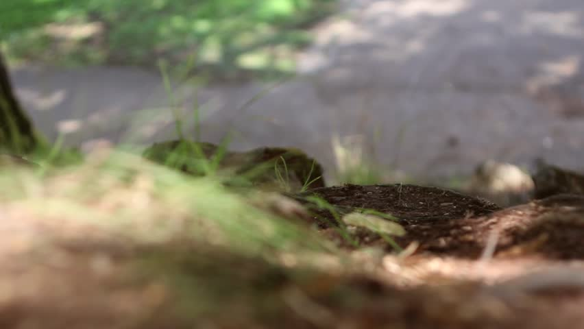 Mountain bikers, cyclist, speeding in beautifully colored wood, unrecognizable by motion blur