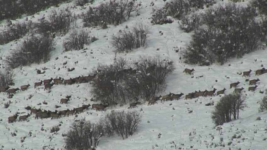 Time-Lapse: Moose Tracks - HD stock video clip