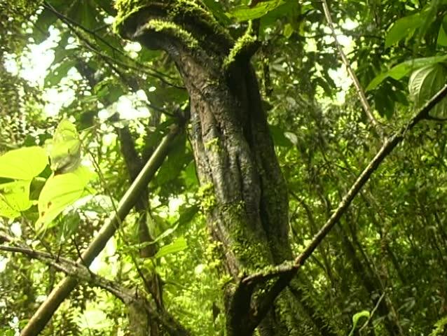 River Liana Nude Photos 51