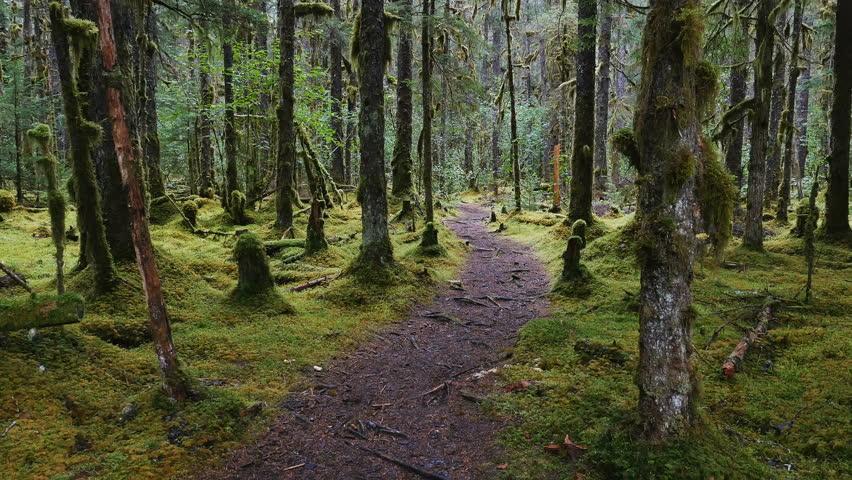 RAIN FOREST NEAR GUSTAVUS ALASKA - AUGUST 2016: POV-Walking pathway through a moss covered Alaskan rain forest on a gloomy, cloudy, rainy day - gyro stabilized. | Shutterstock HD Video #19143817