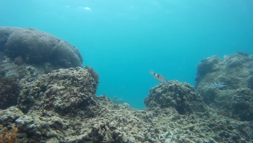 Nice coral reef and tropical fish | Shutterstock HD Video #19314115