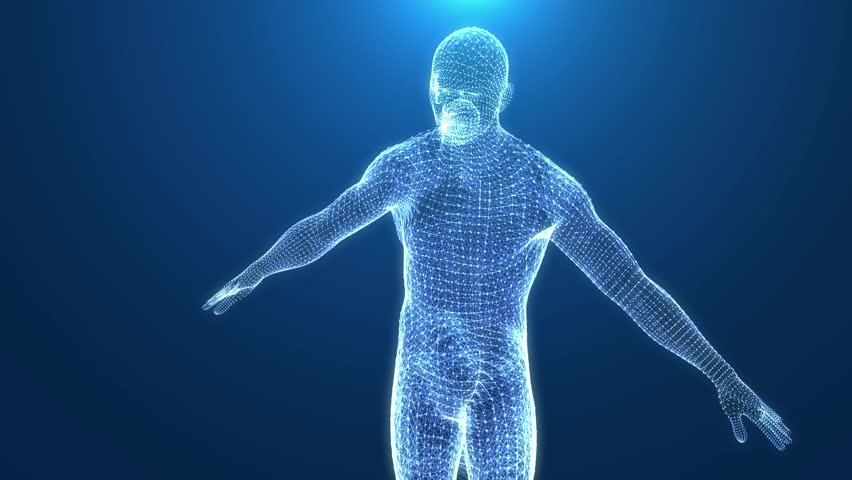 Human body wired. Male shape outline rotating. Seamless loop.