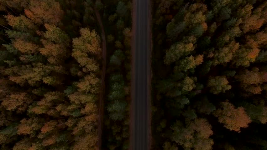 Aerial Flight over the road between fields. Autumn colors. #19679488