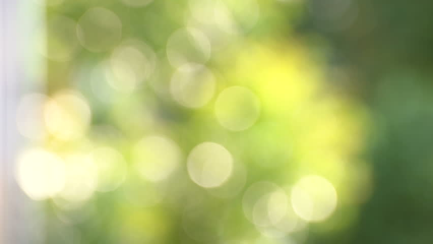 Natural green leaf blurred in background and sunlight bokeh | Shutterstock HD Video #20127607