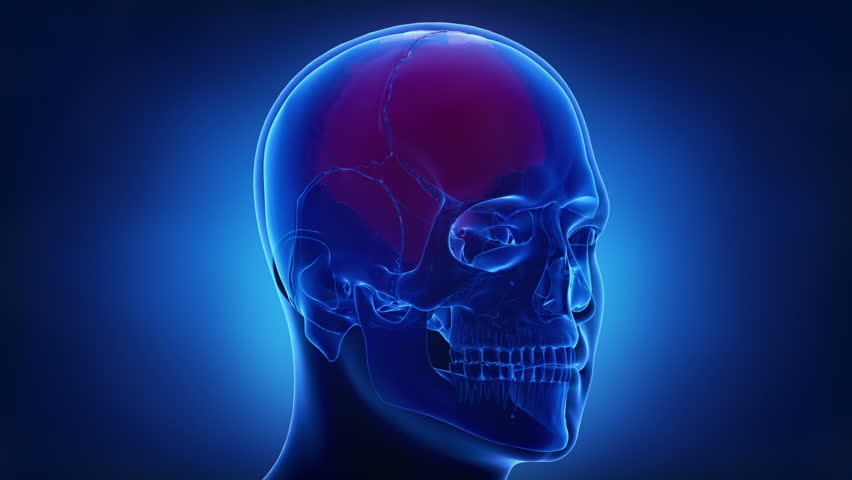 Blue skull x-ray animation parietal bone - os parietale | Shutterstock HD Video #20512348