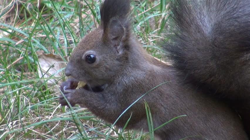 beautiful squirrel stock footage video 2134535 shutterstock