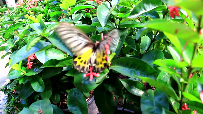 Beautiful Butterfly Video 100
