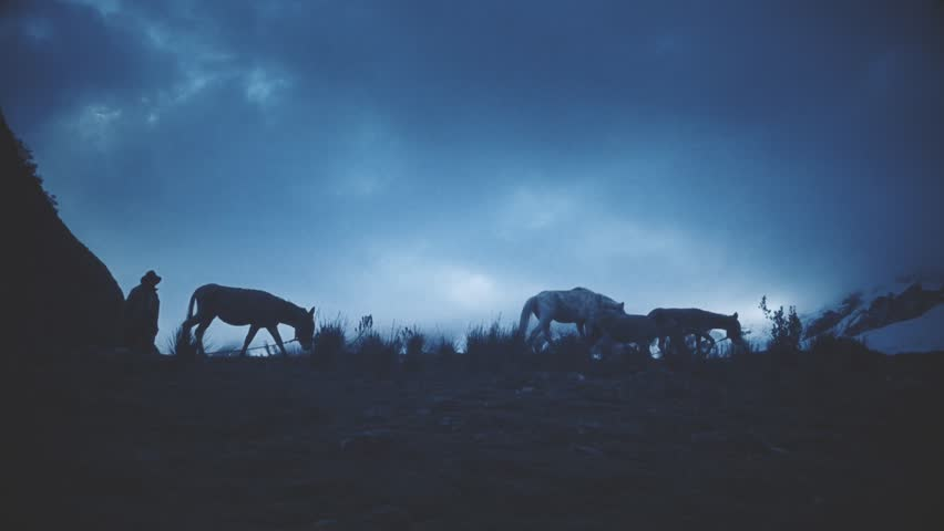 Silhouette of shepherd walking with mules and horses on the hill. Slow motion | Shutterstock HD Video #21892201