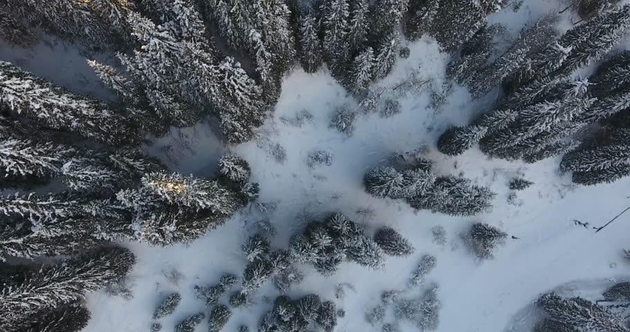 Winter flight in snowy mountains with trees in Almaty, Kazakhstan | Shutterstock HD Video #21925690