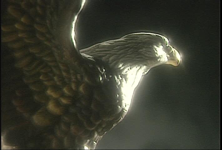 Eagle sculpture in studio - 2 shot (clip 1 of 3) - SD stock footage clip