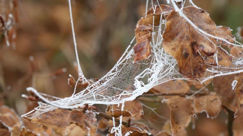 a cobweb on the groud in a woods covered by iced hoar frost #22459552