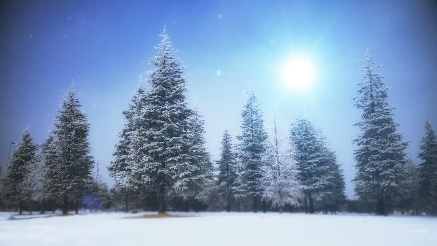 Holiday tree | Shutterstock HD Video #22463881