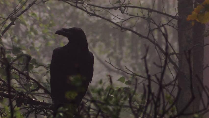 Ravan in woodland at night