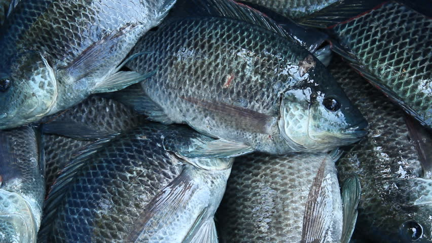Live fresh fish being sold in the market of thailand stock for Fresh fish online