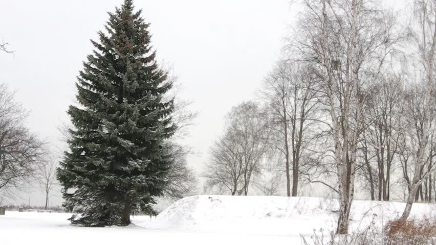 A beautiful Christmas tree in the snow. | Shutterstock HD Video #23206723