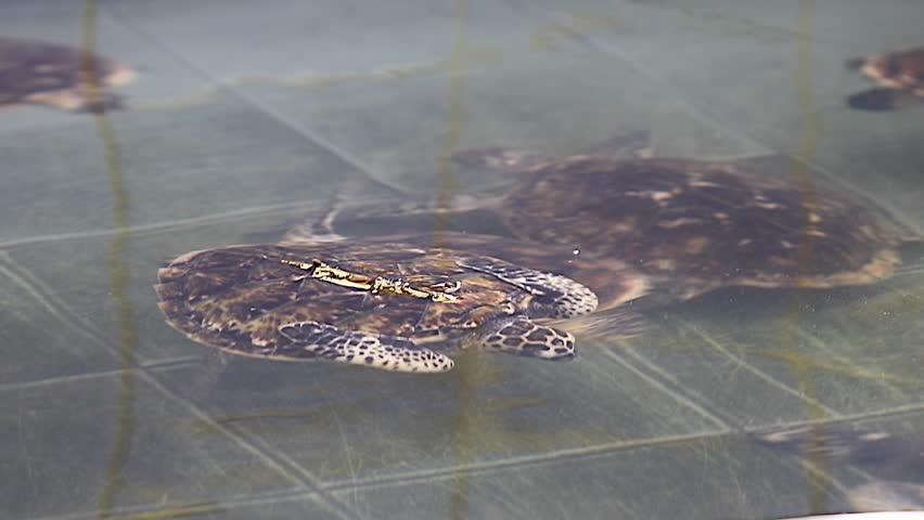 Green sea turtle  | Shutterstock HD Video #23213851