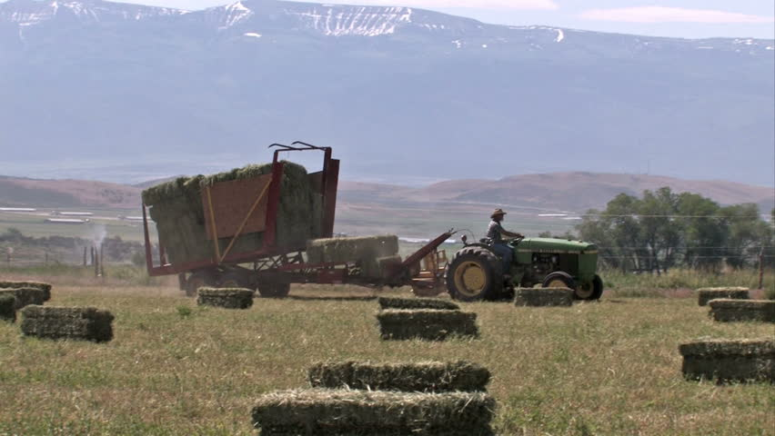 Farm in Utah where alfalfa Lucerne hay bales are harvested  for livestock and cattle food. Picking up and loading the bales automatically by tractor. Sprinklers in field.  - HD stock footage clip