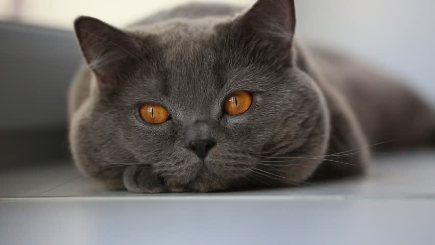 Close up of cat's eyes | Shutterstock HD Video #24133732