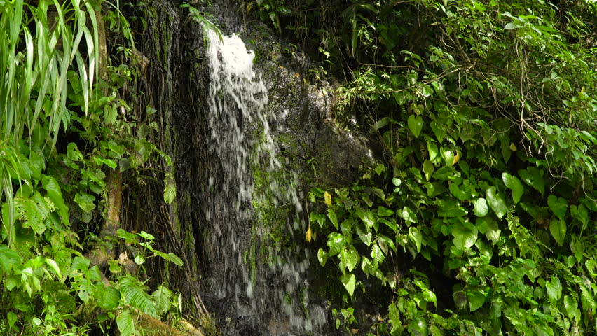 Tropical rain forest with waterfall. Philippines, Cebu. 4K video. Travel concept.   Shutterstock HD Video #24136900