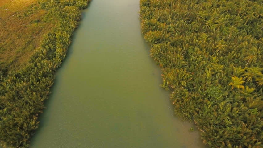 Aerial view of mangrove forest and river. 4K video. Aerial footage | Shutterstock HD Video #24157789