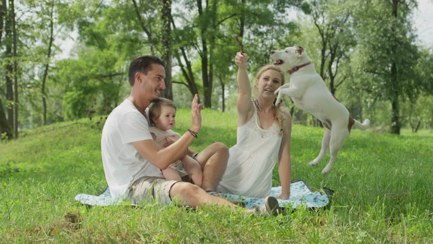 SLOW MOTION, CLOSE UP, DOF: Happy dark haired young dad, cheerful sweet baby girl and pretty blonde mum in white dress sitting on blanket on the ground in park, playing and teasing cute dog with stick | Shutterstock HD Video #24224578