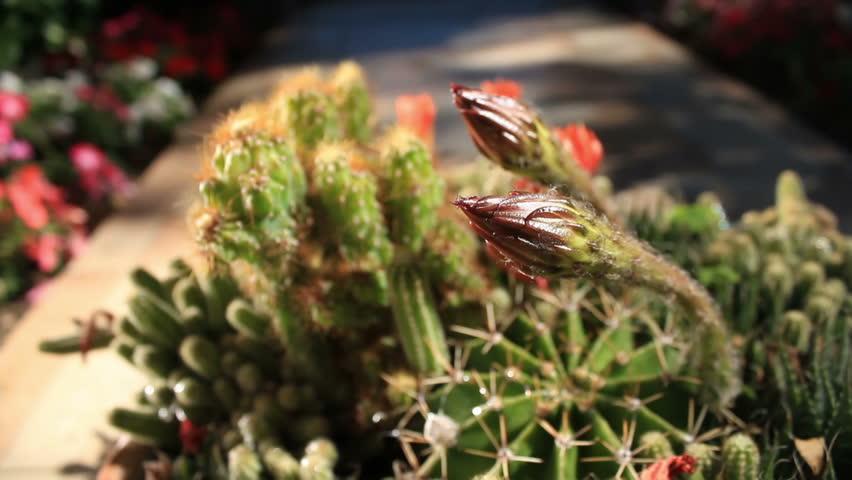 Cactus outdoor camera movement 05