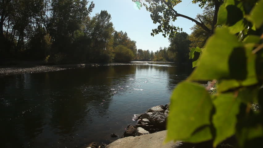 Trees on the banks of the Boise River. - HD stock video clip