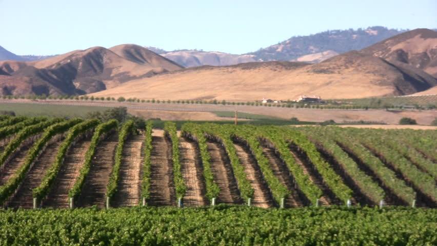 Vineyard in the Santa Ynez Valley, California - HD stock footage clip