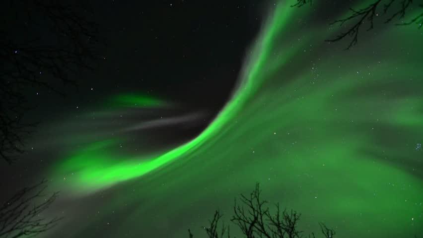 Aurora borealis over a Scandinavian forest
